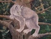 Grey Lynx